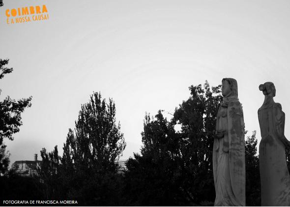 santa clara por francisca moreira